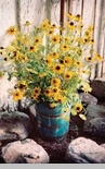 "Framed Print - ""Blackeyed Susans with Bucket Framed Print"" - 11"" x 17"" Vertical"""
