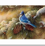 "Lang Boxed Christmas Cards - ""December Blue Jay"" - Artist Rosemary Millette"