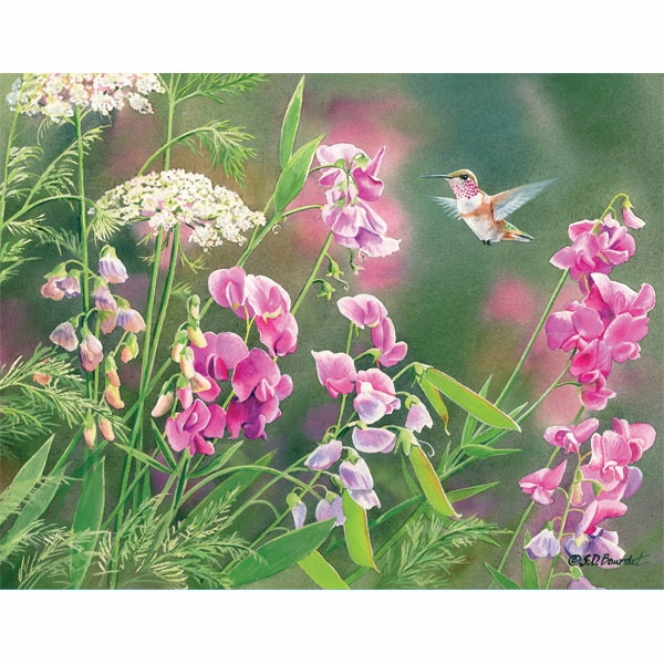 "Lang Boxed Notecards - ""Wild Sweet Pea"" - Artist  Susan Bourdet"
