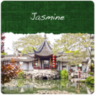 Jasmine with Flowers Tea (1/2lb Bag)
