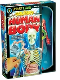 Squishy Human Body Skeleton with Removable Organs
