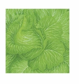 Paper Napkins Lunch Cabbage