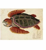 Paper Placemats Turtle