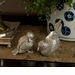 Antique Silver Chicks by Dessau Home