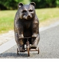 Big Bear on Little Tricycle Figure by SPI Home