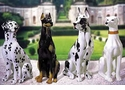 Intrada Italy Doberman Dog Statue
