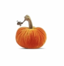 "Plush Pumpkin 6"" Decorative Pumpkin - Carrot"