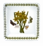 "Portmeirion Botanic Garden Square 6"" Plates (Assorted Set of 6)"