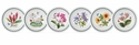 Portmeirion Exotic Botanic Garden Set of 6 Assorted Pasta Bowls