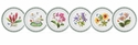 Portmeirion Exotic Botanic Garden Set of 6 Assorted Salad Plates