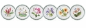 Portmeirion Exotic Botanic Garden Set of Six Assorted Bread and Butter Plates