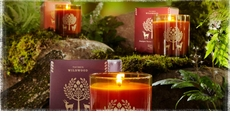 Thymes Wildwood Fragrance Collection