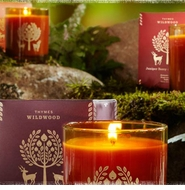 Thymes Wildwood Fragrance Collection Clearance Sale