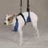 Support RX Sling For Dogs