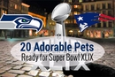 20 Adorable Dogs and Cats Who Are Ready For Superbowl XLIX