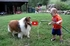 A Baby and His Sheltie Appreciate the Joys of a Simple Garden Hose!