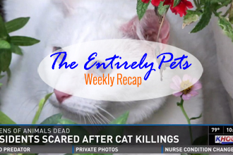 A Serial Cat Killer is Still at Large in Houston, The Ebola Dog is Found to be Virus-Free, and Veterinarians Save a Cat�s Life by Getting it Drunk on Vodka-  This & More in the EntirelyPets Weekly Recap (October 18-24, 2014)