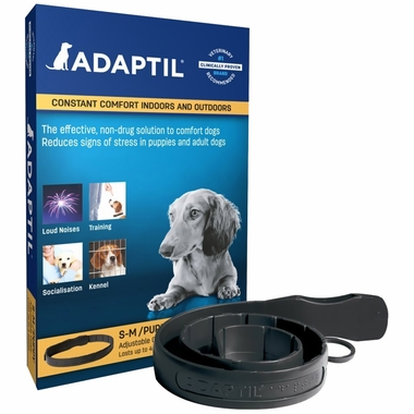 Dap Collars For Small Dogs