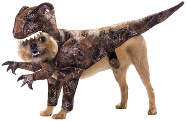 Animal Planet Raptor Dog Costume - Medium