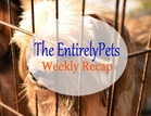 Anti-Puppy Mill Legislation Proves Effective, Russian Bank Loans Cats to Customers, Science Explains the Resemblance between People and Pets � All This and More in this week�s EntirelyPets Weekly Recap (August 25-29, 2014)