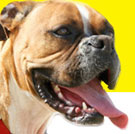 Arthrin For Dogs