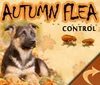 Autumn Flea