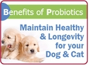 Benefits of Probiotics for Dogs & Cats