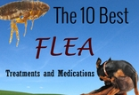 Best 10 Flea Medications and Treatments