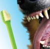 Canine Dental Disease