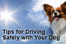Cars and Canines: Tips for Driving Safely with Your Dog