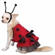 Casual Canine Lady Bug Costume