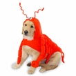 Casual Canine Lobster Costume - XLARGE