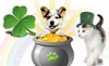 Celebrate St. Patrick's Day Sale - Go Green & Save