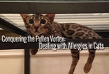 Conquering the Pollen Vortex: How to Treat Allergies in Cats