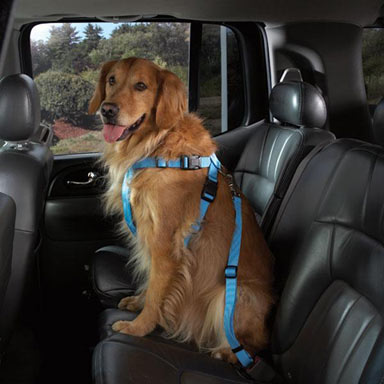 Cruising Companion Car Harnesses for Pets