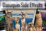 Dasuquin Side Effects