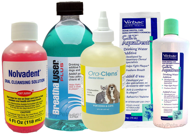 Dental Additives for Cats