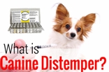 Distemper in Dogs&#58 Symptoms, Causes, Treatments & the Distemper Shot