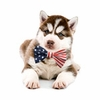 EntirelyPets Memorial Day Weekend Sale