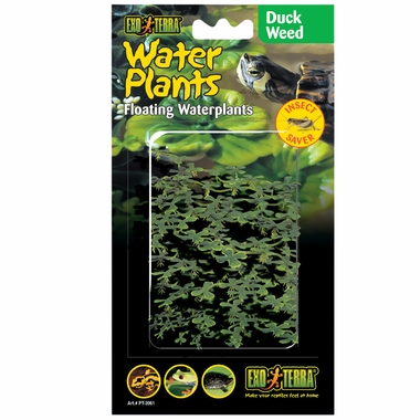 Exo-Terra Water Plants Duck Weed
