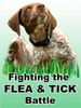 Fighting the Flea & Tick Battle