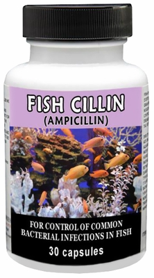 Fish Cillin (Ampicillin) 250mg (30 tablets)