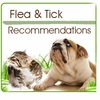 Flea and Tick Recommendations