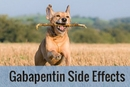 Gabapentin Side Effects