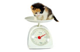 Guide to Healthy Pet Weight