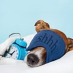 Canine Comforts: How to Help Your Dog Sleep Well