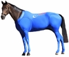 Hidez Horse Compression Suits - BLUE (58 - 59 3/4 inches)