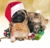 Holiday Pet Toys