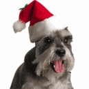 Holiday Pet Toys & Treats