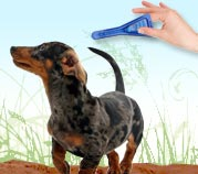 How to Apply Flea & Tick Medication